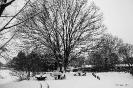 2013-01-16 Schneebild 2